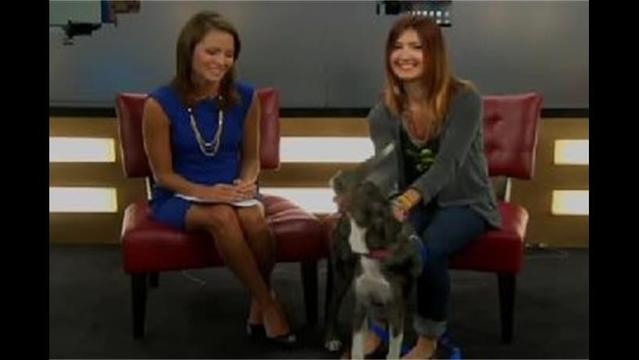 Meet Sierra, an Australian Shepard mix, who is the NBC 6 Pet of the Week