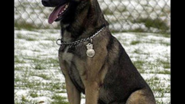 Barksdale Profile: Bond Between Military Dogs & Handlers