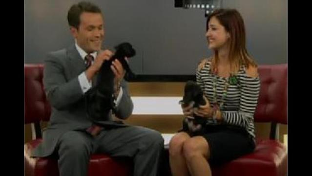 NBC 6 Pets of the Week: Snickers and Rocky Road
