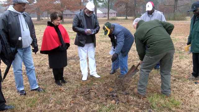 World War One memorial tree planted