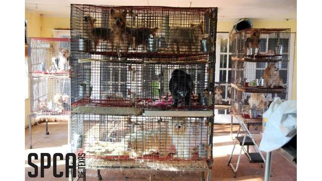 SPCA of Texas seizes 140 animals from puppy mill