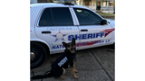 Natchitoches Parish Sheriff's Office K9 Bessi recieves donation of body armor