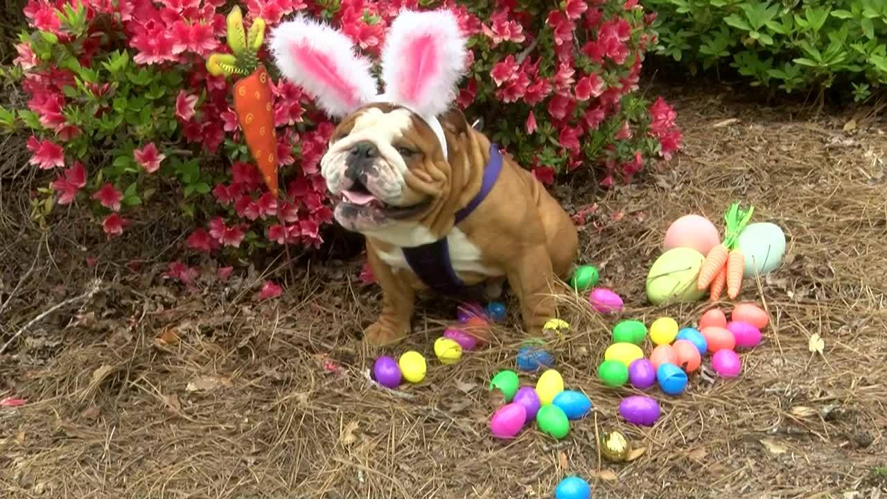 NC Dog Wins National Bunny Contest
