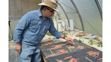 LSU AgCenter researcher works to control sweet potato shape